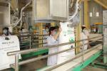 Độ ẩm tiêu chuẩn trong quá trình sản xuất và bảo quản đường