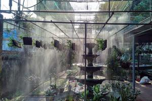 Vì sao cần sử dụng máy phun sương tạo ẩm cho giàn trồng hoa lan vào mùa hè?