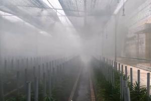 PROBUY cung cấp hệ thống phun sương tạo độ ẩm cho vườn trồng hoa lan