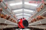 Ứng dụng máy sưởi vào việc úm gà con hiệu quả